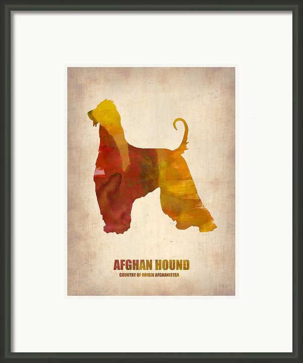 Afghan Hound Poster Framed Print By Naxart Studio