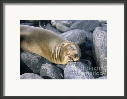 Afternoon Nap Framed Print By James Brunker