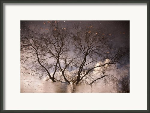 Afternoon Reflection Framed Print By Derek Selander