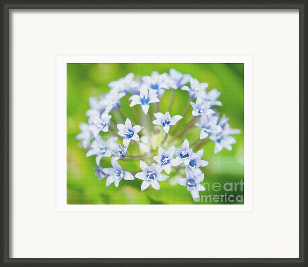 Agapantha Purple Flowers Framed Print By Author And Photographer Laura Wrede