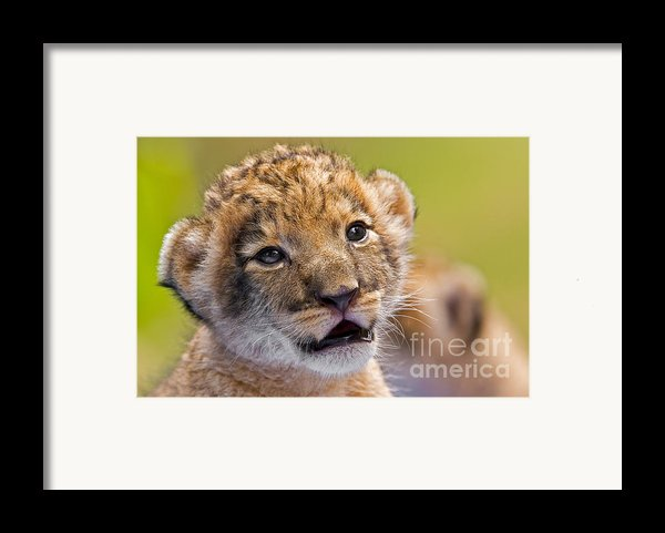 Age Of Innocence Framed Print By Ashley Vincent