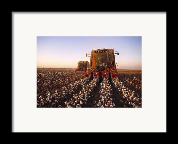 Agriculture - Cotton Harvesting  San Framed Print By Ed Young