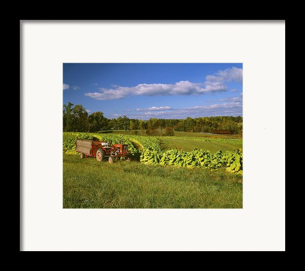 Agriculture - Fields Of Maturing Flue Framed Print By R. Hamilton Smith