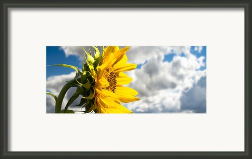 Ah Sunflower Framed Print By Bob Orsillo