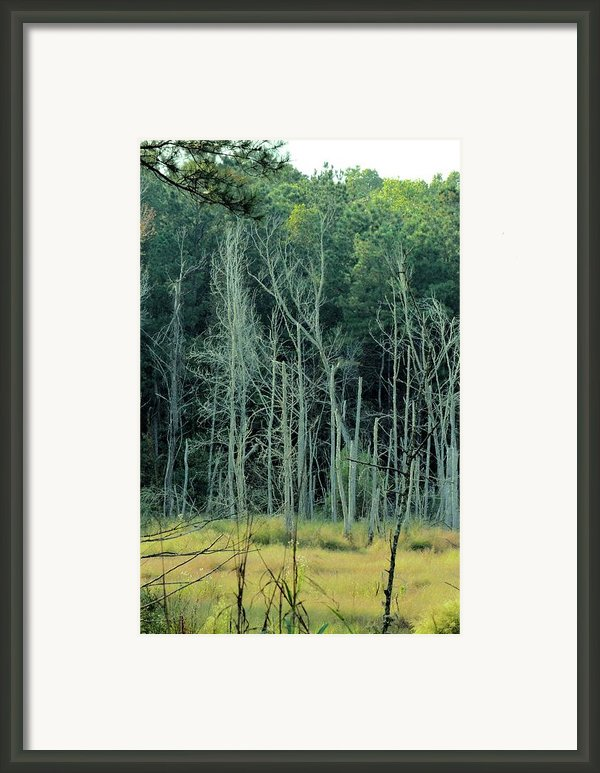 Alabama Autumn Marsh Framed Print By Maria Urso