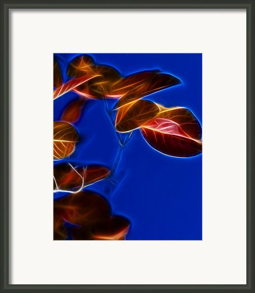 Alien Autumn Framed Print By Camille Lopez