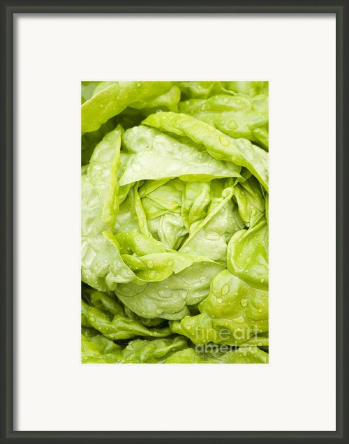 All The Year Round Framed Print By Anne Gilbert