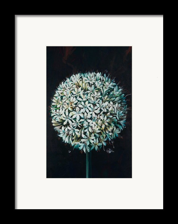 Allium Framed Print By Lynette Yencho