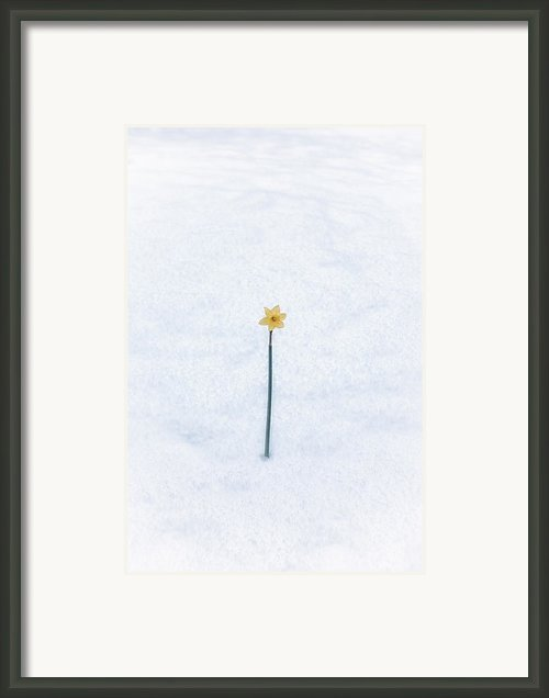 Almost Spring Framed Print By Joana Kruse