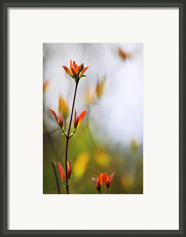 Amber Glow Framed Print By Christina Rollo