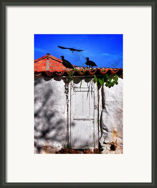 Amigos Negros Framed Print By Skip Hunt