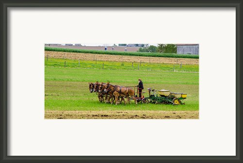 Amish Farmer Framed Print By Guy Whiteley