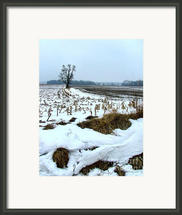 Amish Field In Winter Framed Print By Julie Dant