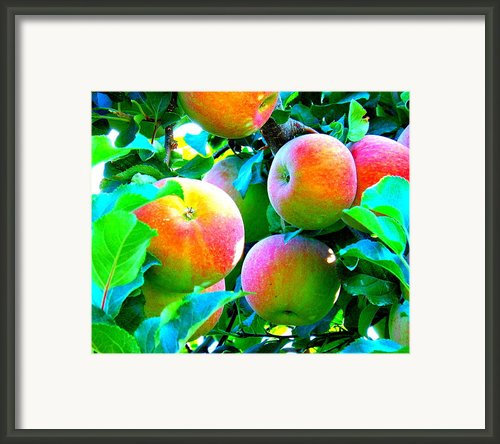 An Apple A Day Framed Print By Kay Gilley
