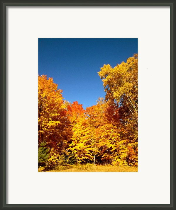 An Autumn Of Gold Framed Print By Danielle  Broussard