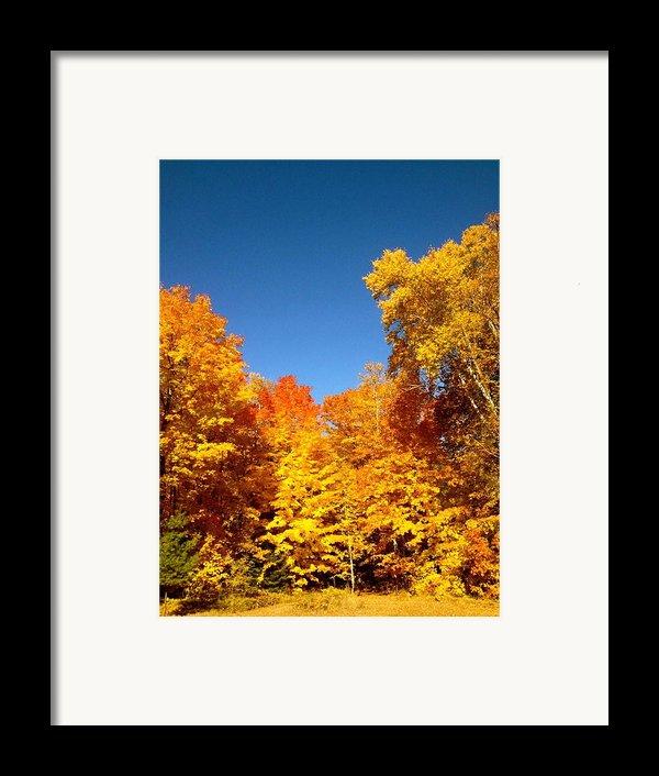 An Autumn Of Gold Framed Print By Danielle  Broussard