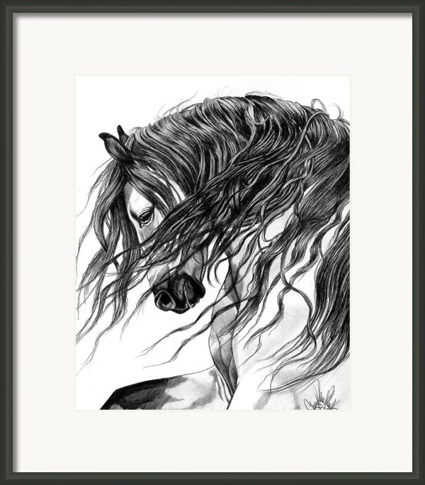 Andalusian-arabian Head Framed Print By Cheryl Poland