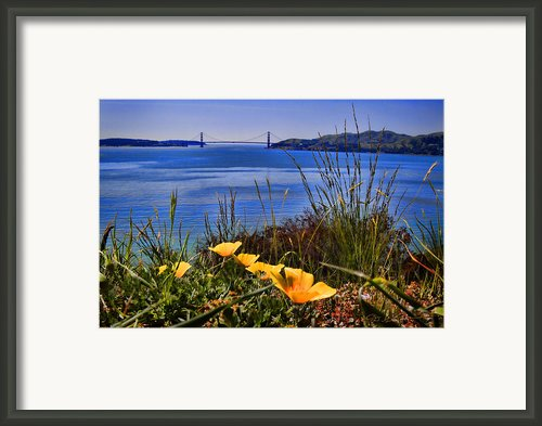 Angel Island State Park California - Poppies In The San Francisco Bay Viewing Golden Gate Bridge Framed Print By David Rigg