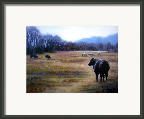 Angus Steer In Franklin Tn Framed Print By Janet King