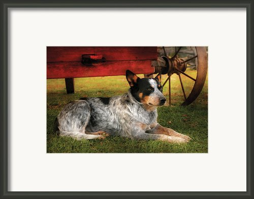 Animal - Dog - Always Faithful Framed Print By Mike Savad