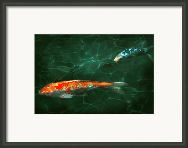 Animal - Fish - Koi - Another Fish Story Framed Print By Mike Savad
