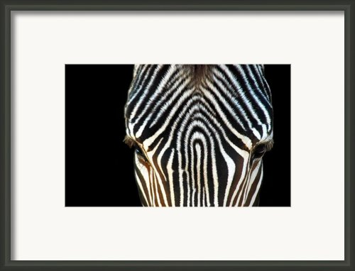 Animal Print Framed Print By Dan Holm