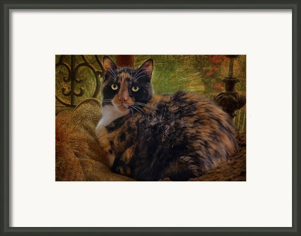 Annabelle Framed Print By Larry Marshall