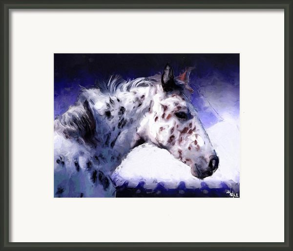 Appaloosa Pony Framed Print By Roger D Hale