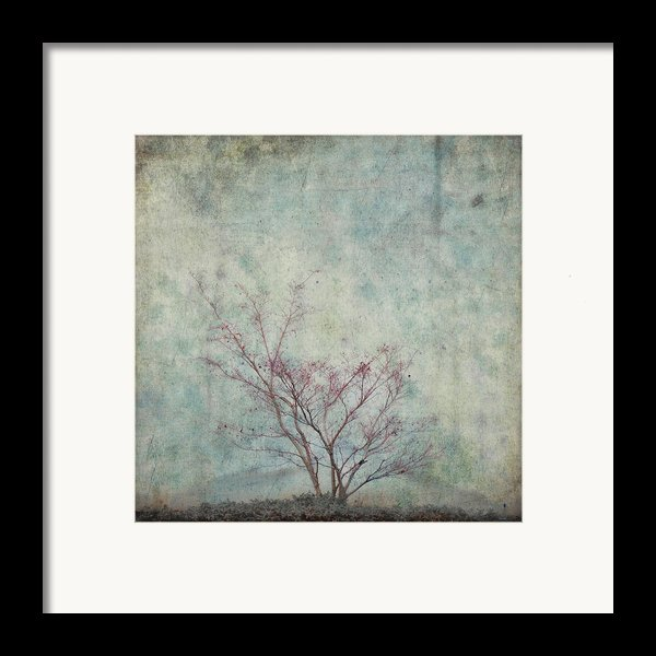 Approaching Spring Framed Print By Carol Leigh