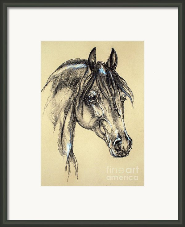 Arabian Horse Sketch Framed Print By Angel  Tarantella