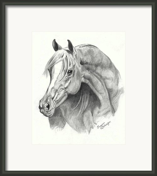 Arabian Stallion Framed Print By Suzanne Schaefer