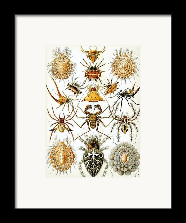 Arachnida Framed Print By Nomad Art And  Design