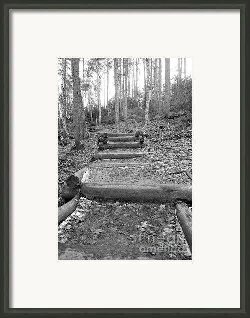 Arethusa Falls Mountain Trail Framed Print By Catherine Reusch  Daley