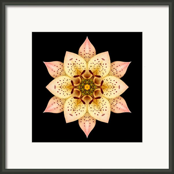 Asiatic Lily Flower Mandala Framed Print By David J Bookbinder