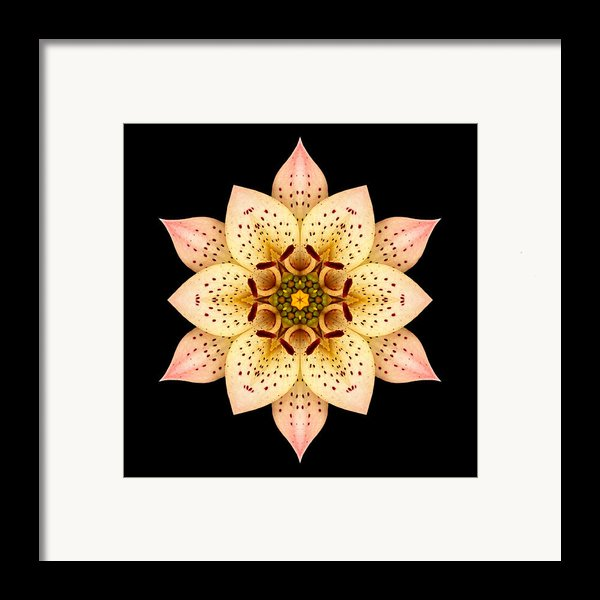 Asiatic Lily Flower Mandala Framed Print By David J Bookbinder