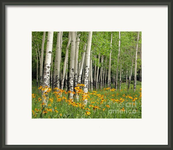 Aspen Grove And Wildflower Meadow Framed Print By Matt Tilghman