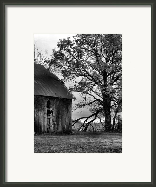 At The Barn In Bw Framed Print By Julie Dant