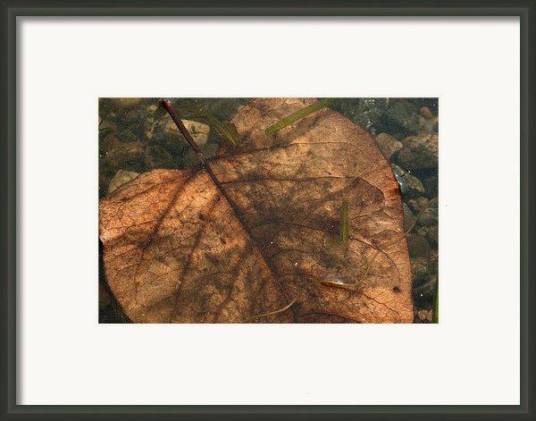 Atres 11 Framed Print By Karol  Livote