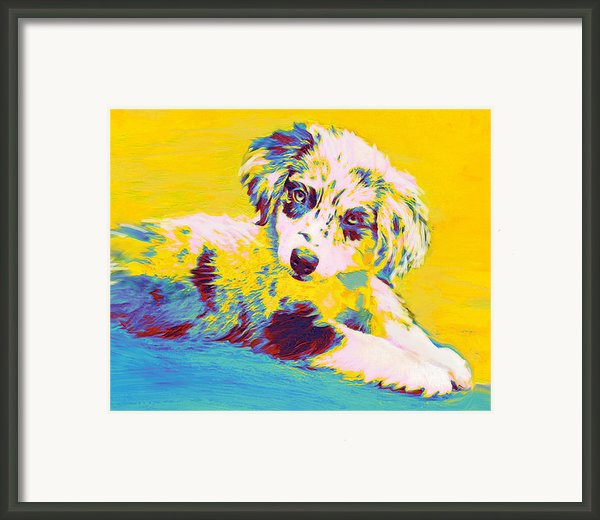 Aussie Puppy-yellow Framed Print By Jane Schnetlage