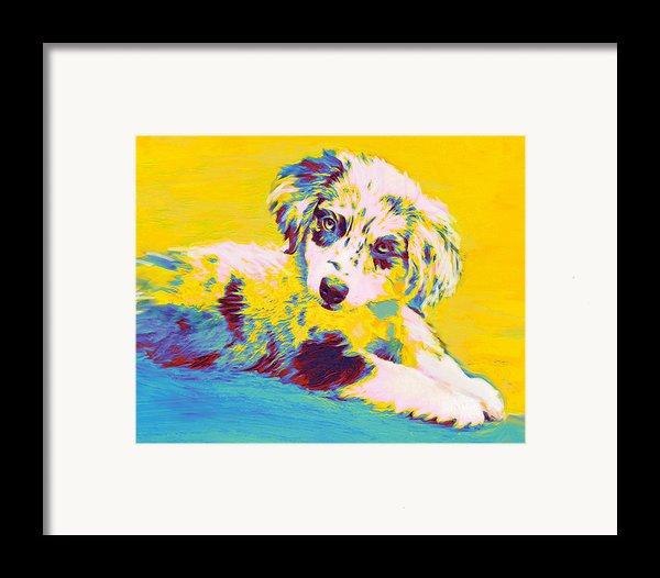 Aussie Puppy-yellow Framed Print By Jane Schnetlage