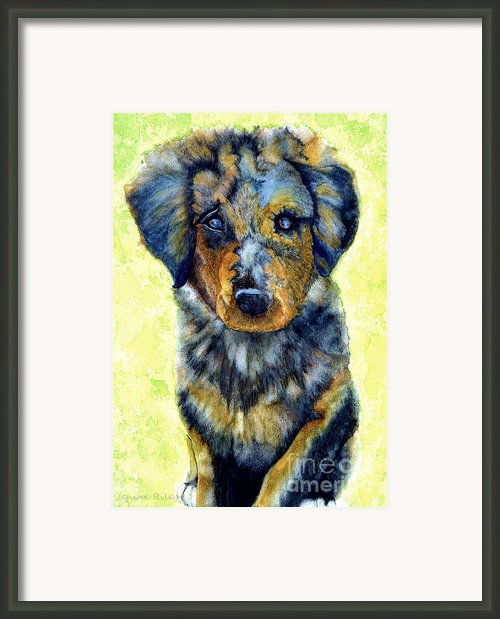 Australian Shepherd Puppy Framed Print By Janine Riley