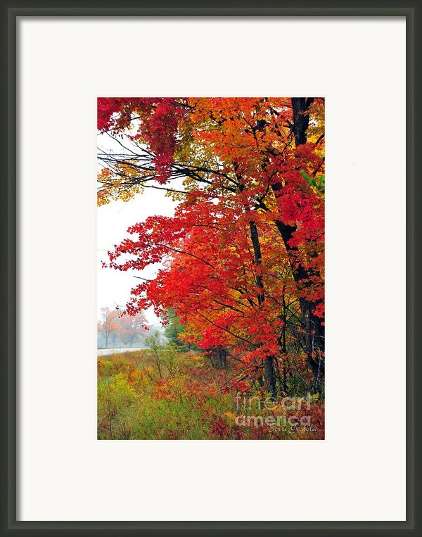 Autumn Along A Country Road Framed Print By Terri Gostola