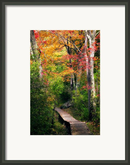 Autumn Boardwalk Framed Print By Bill  Wakeley