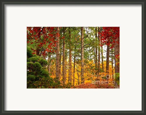 Autumn Canvas Framed Print By Carol Groenen
