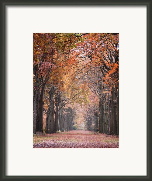 Autumn - Colorful Red Green Orange Nature Landscape Fine Art Photography Framed Print By Artecco Fine Art Photography - Photograph By Nadja Drieling