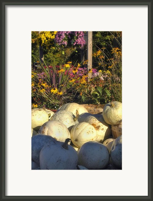 Autumn Gourds Framed Print By Joann Vitali