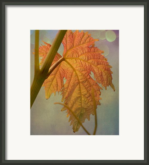 Autumn Grapevine Framed Print By Fraida Gutovich