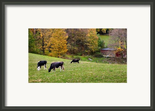 Autumn Graze Framed Print By Bill  Wakeley