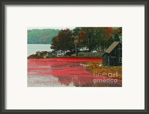 Autumn Harvest Framed Print By Gina Cormier