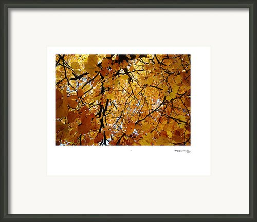 Autumn In Aerdenhout 3 Framed Print By Xoanxo Cespon